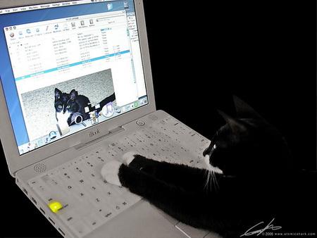 gato comunicándose